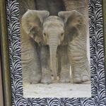 safari_DSC_1091